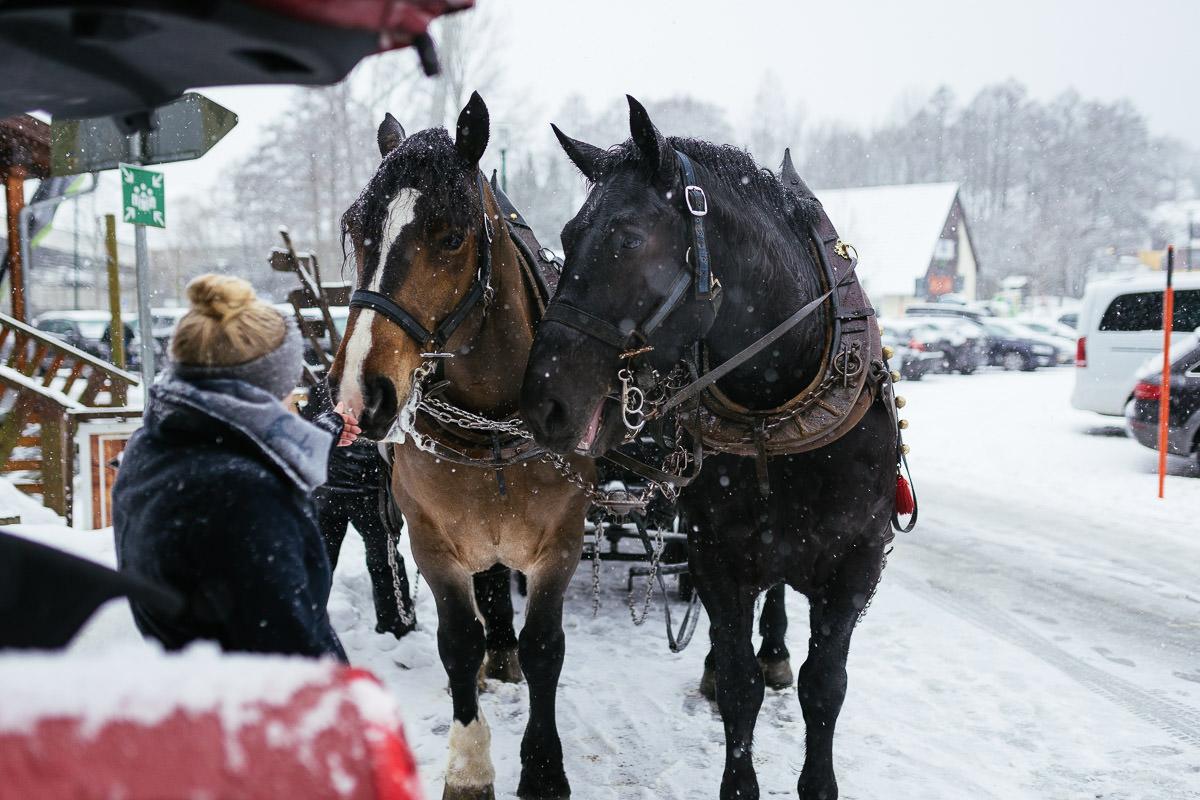 Harz Braunlage Wurmberg Schnee Pferde Kutsche