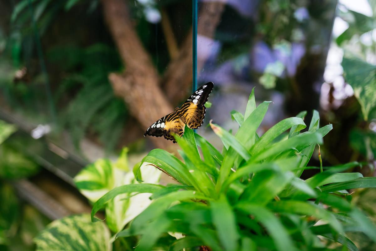 Elbauenpark Magdeburg Schmetterling