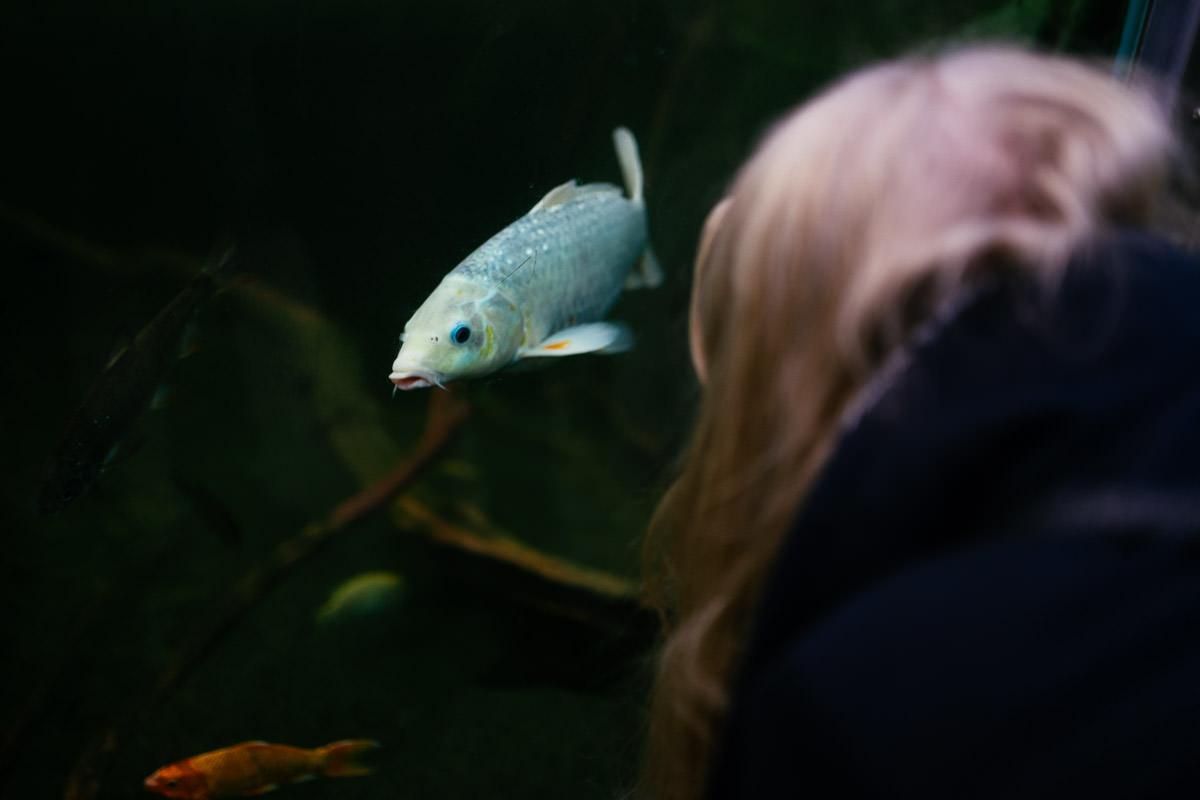 Elbauenpark Magdeburg Fisch